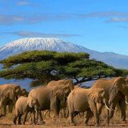 tour_image_kenya